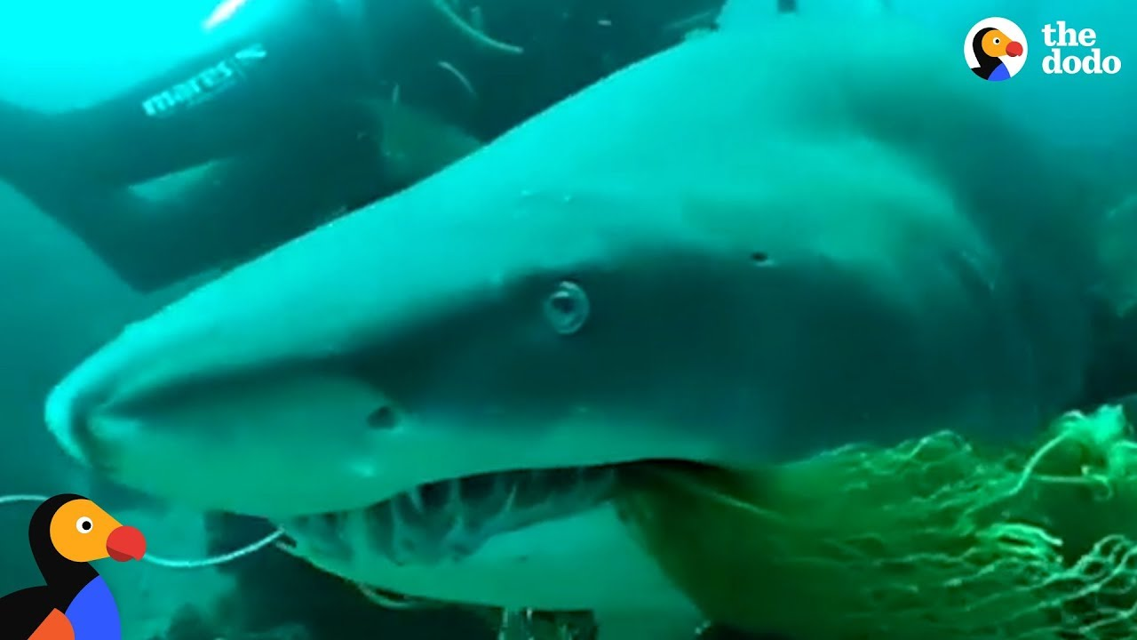 Scuba Diving Instructor Saves Shark Trapped In Fishing Net
