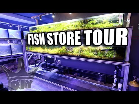 Aquarium fish store tours in NYC
