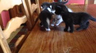 6 adorables chatons à donner
