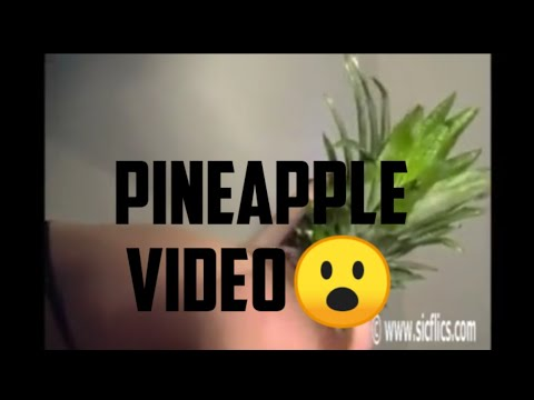 Pineapple Video Full Hd Trending Now On Twitter! Watch It Now