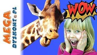 Super Quiz Zwierzęta • Kapitan Nauka • gry dla dzieci