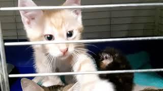 Приют для кошек Киев