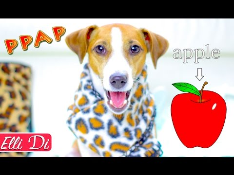 PPAP - Pen Pineapple Apple Pen | DOG Jina sings Puppy Dog | Elli Di Pets
