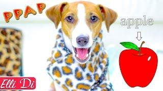 СОБАКА ДЖИНА ПОЁТ PPAP | Elli Di Pets