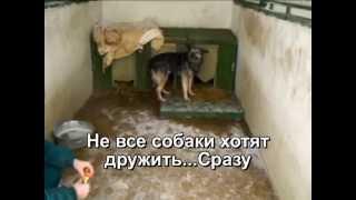 Дрессировка собак из приюта. Харьков