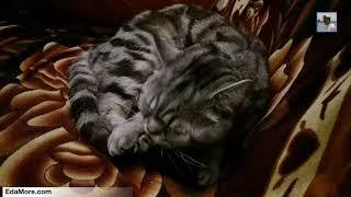 Кот облизывается. Артур релаксирует видео от Petr de Cril'on