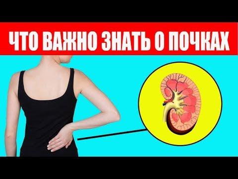 3 ПОЧКИ. Как восстановить здоровье. Система СВОТ