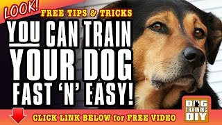 Dog Training San Diego | Free Dog Training Tips | Dog Obedience Training San Diego, Ca