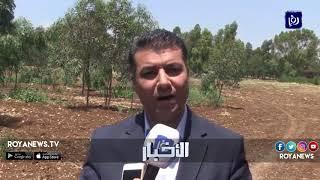"""""""الزراعة"""" خفض أجور رش المبيدات 50% لدعم القطاع الزراعي - (16-5-2018)"""