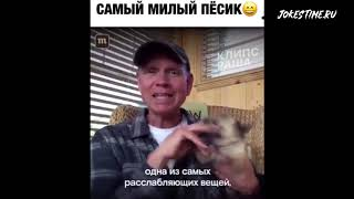 СМЕХ ДО СЛЁЗ ✔️ ПОДБОРКА ПРИКОЛОВ ржака угар 19