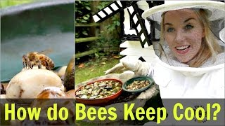 How Do Bees Keep Cool? (Water for Honey Bees) | Beekeeping with Maddie #12