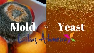 Mold vs Yeast