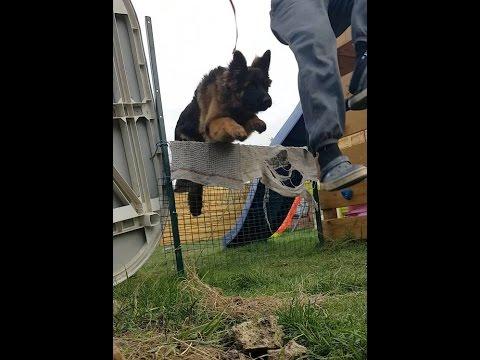 Leçon 3 - Dresser son chien Berger Allemand premiers sauts