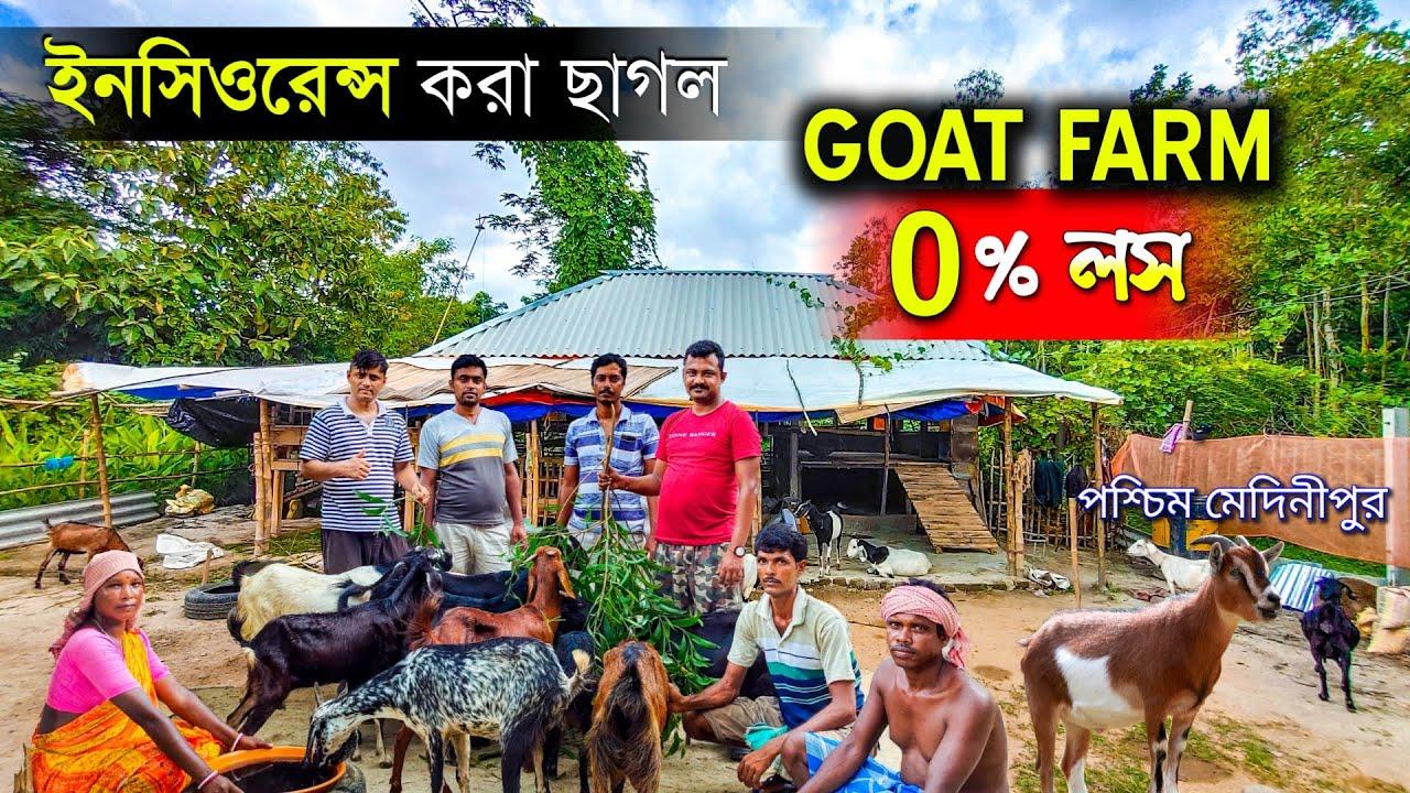 ইনসিওরেন্স করা ছাগল কিনলে GOAT FARM 0% লস ⬇️   Goat Insurance   Goat Farming In India