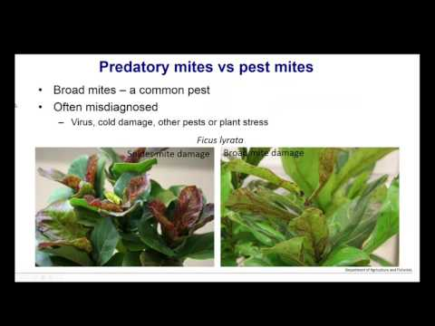 Webinar - Identifying Pests and Beneficial Insects and Mites