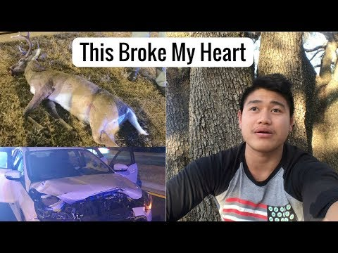 Car-Deer Collision | Car Insurance In U.S. Is So Frustrating!