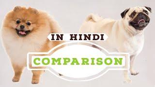 Dog Comparison in Hindi | Pomeranian vs Pug in Hindi | Dog facts
