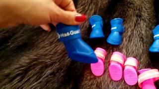 Силиконовые ботинки для собак. Летняя ОДЕЖДА ДЛЯ СОБАК маленьких пород.