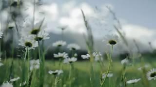 П.И. Чайковский - «Июнь Баркарола» - Tchaikovsky - The Seasons – «Barcarolle  June»