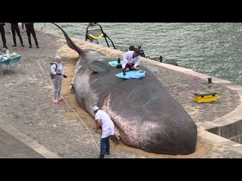 Hold the press... Sperm whale washes up in Paris...