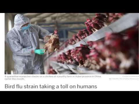 Could the chicken industry be holding back the truth concerning Bird Flu?