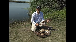 ЛОВЛЯ ЛЕЩА в августе на реке. Убийца карася (соска) и макушатник победили фидер. Рыбалка с ночевкой