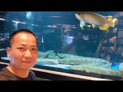 LIOW VIDEO: New Nanyang Aquarium + arowana eat mantis 鱼场看观赏鱼