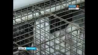 Русский кролик - промышленная кролиководческая ферма поддерживает костромских кролиководов.