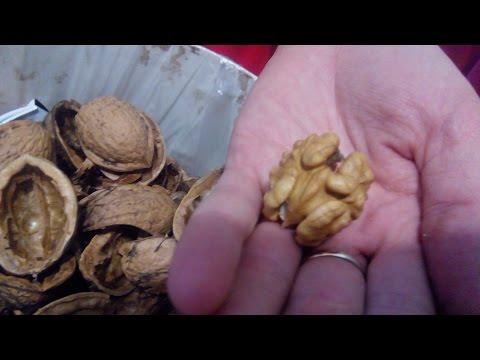 Как почистить и помыть гредцкий орех