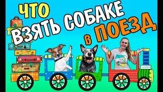 Что взять для собаки в поезд