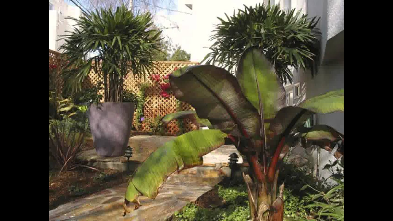 Small Home tropical garden ideas - YouTube on Tropical Patio Ideas id=59573