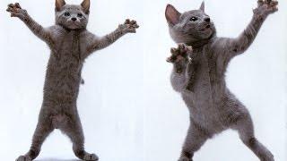 кошка очень смешно танцует!!!!(прикол)