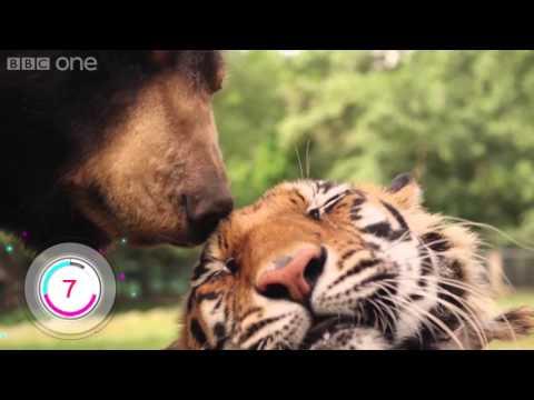 Hayvanların Farklılıkları Aşmada Bizden Daha İyi Olduğuna Kanıt 12 Arkadaşlık
