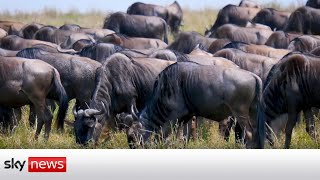 Maasai Mara: Climate change threatens one of nature's greatest spectacles