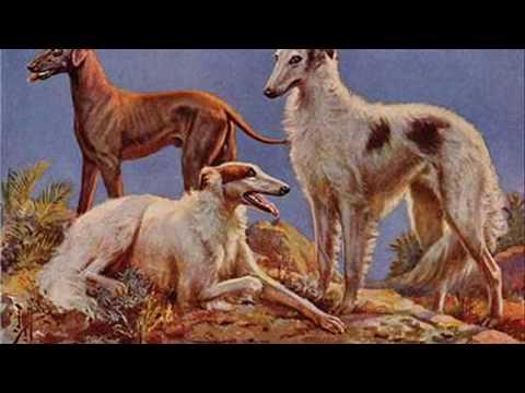 list of indian dog breeds