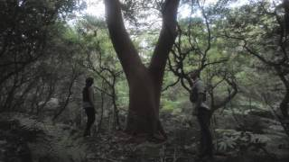 Jinja Safari -