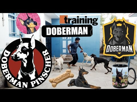 Training Doberman Pinscher Dog For A Month | What Dog Learns In A Month???