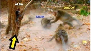 Omg That Is Shocking Alba   Mom And Daddy Take A F.i.g.h.t   Alba Deeply Worries And Scares Both
