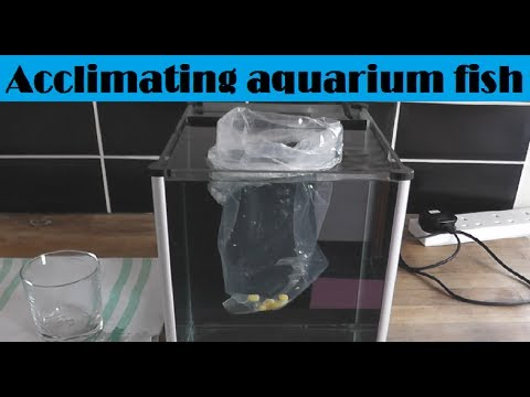 How To Add Fish To A Fish Tank / Aquarium