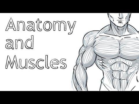 Drawing Anatomy Made Easy Youtube