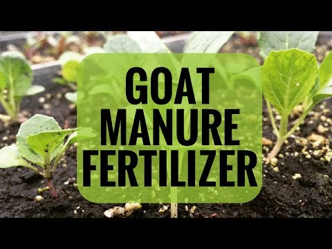 Will Goat Manure Grow Vegetables?