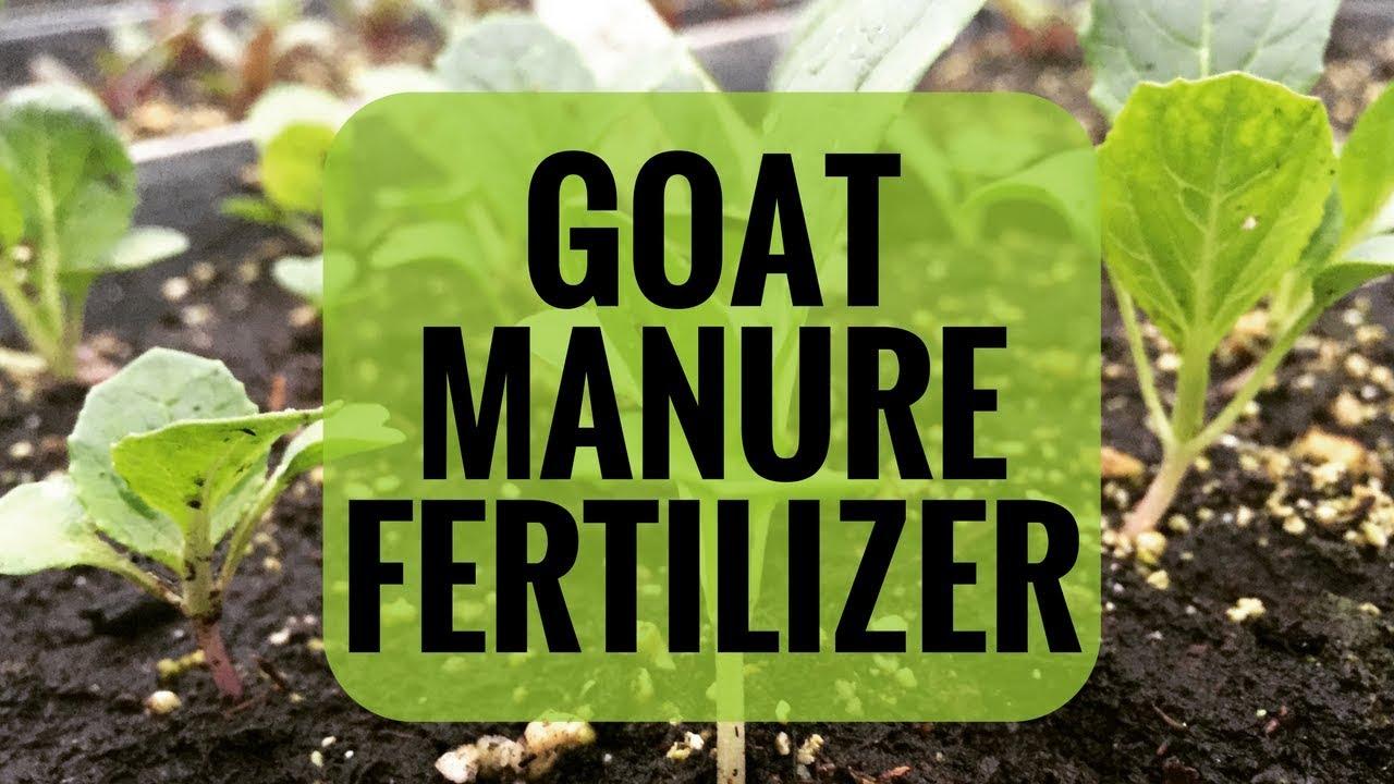 maxresdefault - Is Goat Manure Good For Vegetable Gardens