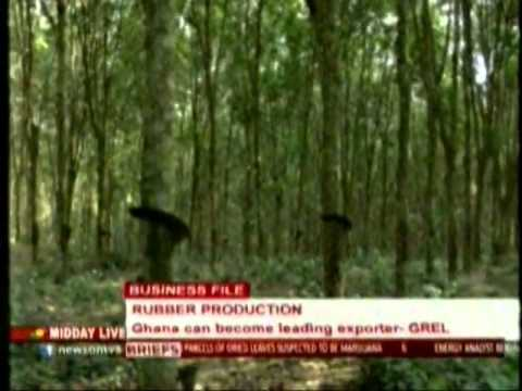 Rubber production in Ghana can become leading exporter GREL