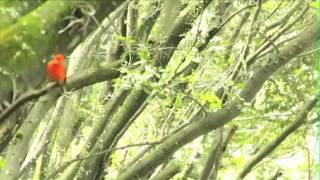 Patrimonio ambiental para la sociedad - Universidad Nacional de Colombia