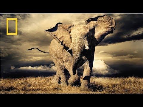 Nat Geo Wild  - Wild Africa - National Geographic Documentary