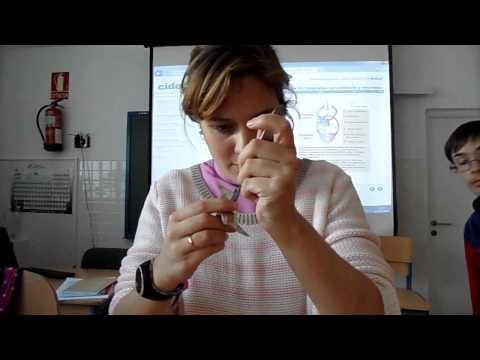 Disección de corazón de cerdo 3º ESO by Maribel S