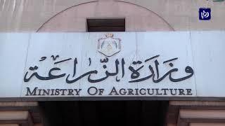 وزارة الزراعة: لا وجود للجراد في أراضي المملكة - (14-4-2019)