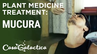 Mucura - Plant Medicine Treatment - Ayahuasca Plant Spirit Healing Retreat in Peru | Casa Galactica