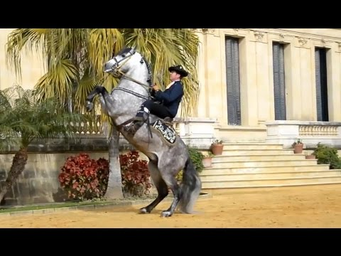 The Andalusian Horse