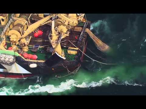 Surpêche- Planète Océan